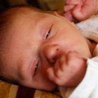 1002. nap: Hüvelyk Panna a tavirózsa közepén (Luca születése)