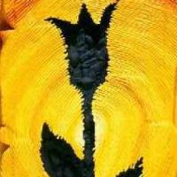 946. nap: Fekete tulipán (Pipike elvesztése)